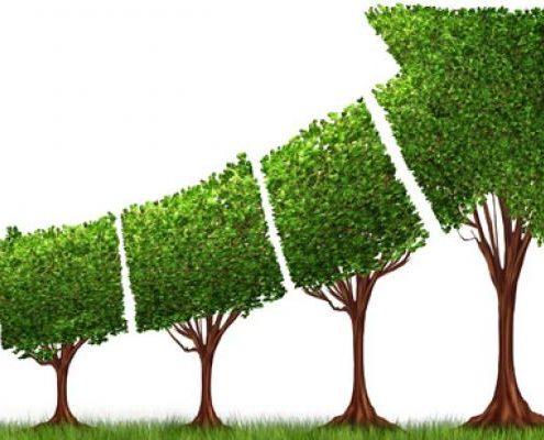 رشد ارگانیک کسب و کار